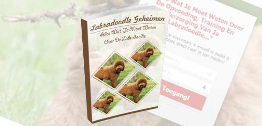 Review: Labradoodle geheimen